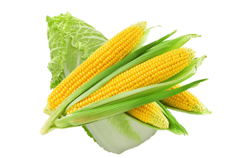 Corn and Wombok