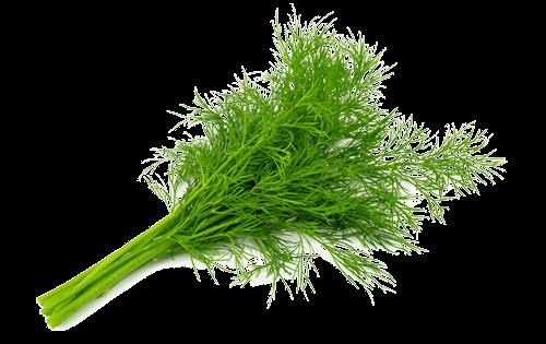 Dill Ready Herbs