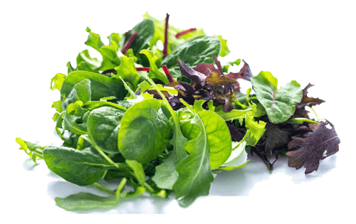 Leafy Salad Vegetables