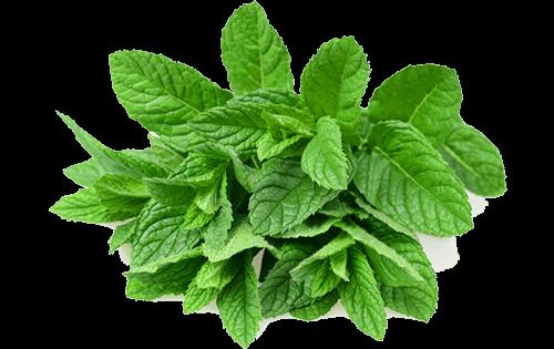 Mint Ready Herbs
