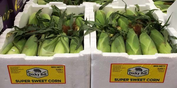 Sweet Corn Boxes